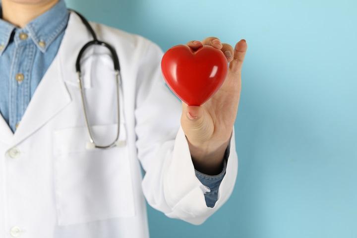 doctor-holding-plasticheart